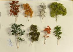 arbre-14.jpg